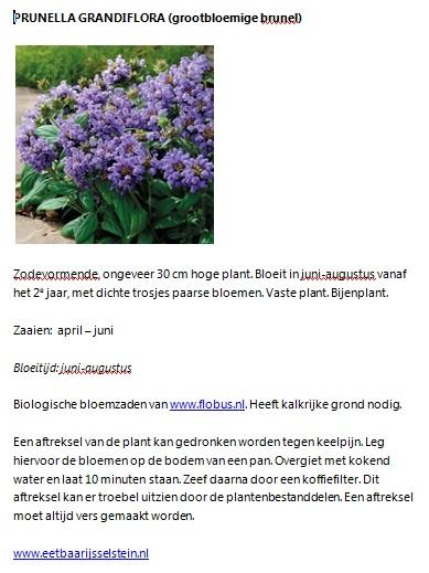 Grootbloemige-Brunel-info