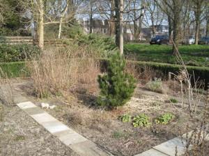 Een deel van de kruidentuin op 20 maart 2015. Vandaag is het NL-doet dag voor ons en gaat het oude hout en blad eruit en wordt de beplanting aangevuld.