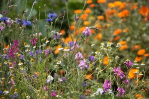 bloemenveldje-IMG_4068