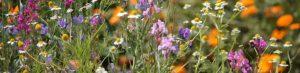 cropped-bloemenveldje-img_4068.jpg
