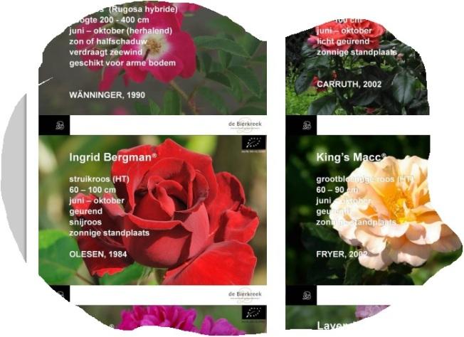 lijst-rozen