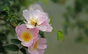 bij-op-bloemen
