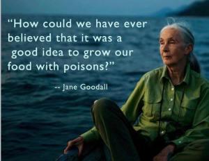 Jane-Goodall-gif