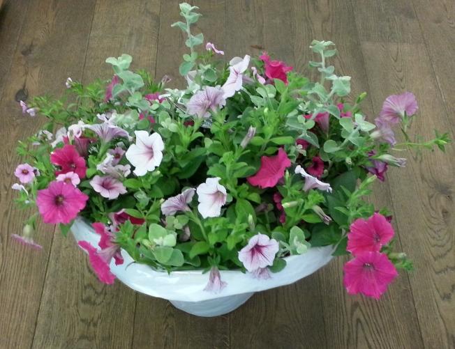 bloemen-20160613_140112.JPG