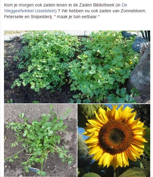 collage-zonnebloem-peterselie-snijselderij