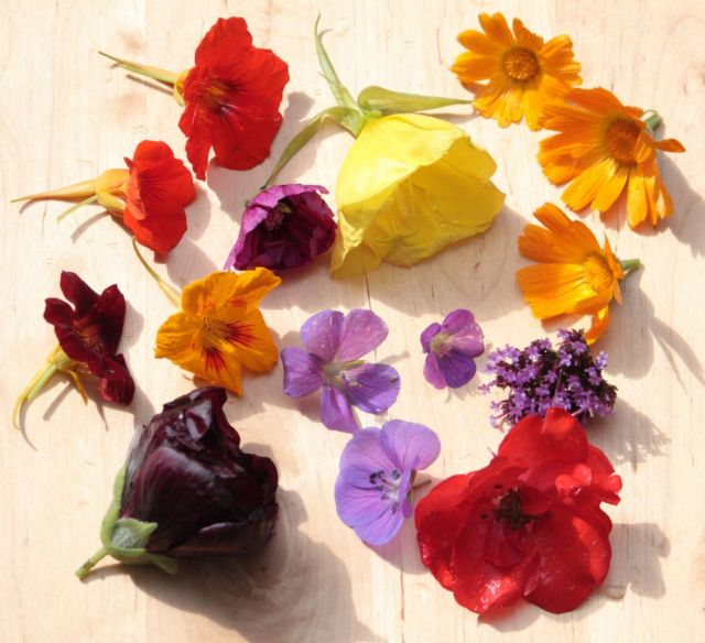 Workshop Eetbare Bloemen