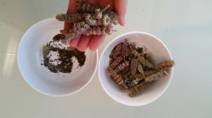 zaden dropplant