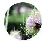 logo project voedselbank bijen