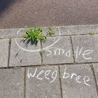 smalle weegbree